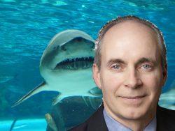 steve-and-shark